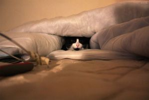 Kitty cave by Lhuin