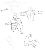 muscle 2 by annyd