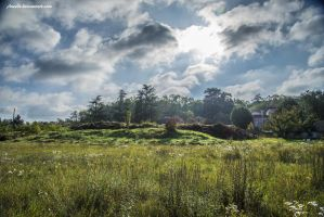 Sunny Landscape by Aneede