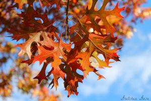 Autumn Color by GretchenGuse