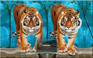 Sumantran Tigers by orionshope