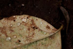 leaf 2 by seafoodmwg