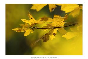 Autumn in Malomvolgy - VII by DimensionSeven