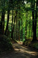 forest road by Wilithin