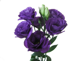 Eustoma bouquet by Redilion