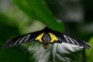 Butterfly 15 by TruemarkPhotography