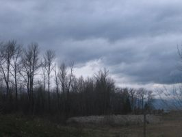Trees and a Cloudy Sky by ArkosSven