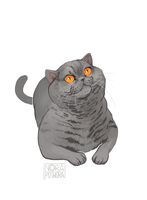 British shorthair by norapotwora