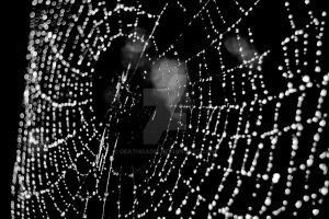 websly by deathgasm