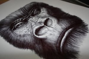 Gorilla by madamerenard