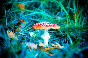 Shroom 3 by aka-photography-uk