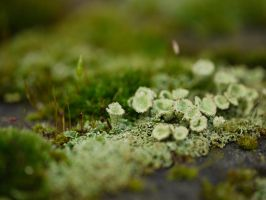 Moss on the brick wall. by asaluiphotography