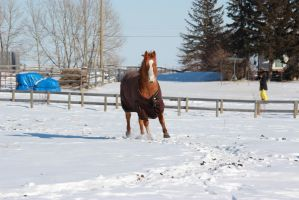 Blanketed horse running through snow 2 by eluhfunt-stock