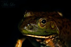 Bull Frog In The Dark by MiaLeePhotography