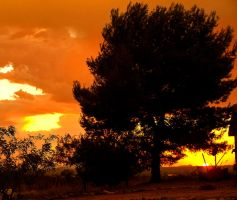 Tangerine and Silhouette. by theblueofmyoblivion