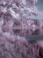 Surreal Infrared 5 by lil-nitelite