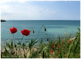Black sea and red poppies by mslusar