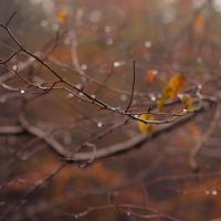 autumn branch by Pamba