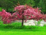 Blossom Tree by xxintothewildxx