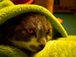 Blanketcat by NickDoleMailBox