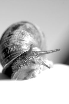 Snail in black and white by cathy001