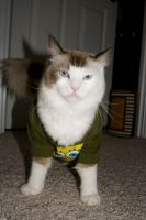Kitty in a Spongebob shirt 4 by Sinned-angel-stock