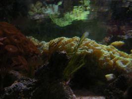 soft coral by child-of-aros