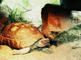 The turtle by Utopeless