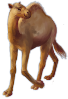 dromedary camel by teacup-elbows