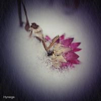 Resilience I by hyneige