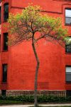 tree on red by FigoTheCat