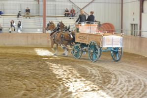 Topsfield Fair, Horse Handler Competition 12 by Miss-Tbones