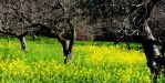 Spring in Sonoma Co. by smfoley