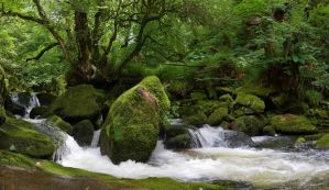 Golitha Falls Pano by runique