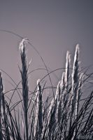 Pampas at Night by entangle