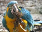 Macaw nest building by Momotte2
