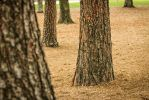 Trees at the park by dopey5150