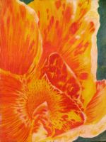 Abstract Canna Lily by kimberly-castello