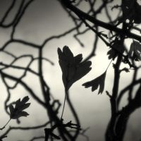 Autumn mono II by lostknightkg