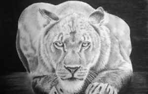 graphite drawing by donnabe