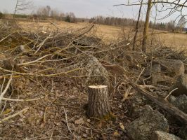 treestump 1 by akinna-stock