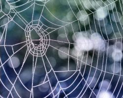 spiderweb by sherln