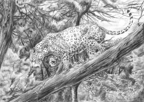 Leopard on the tree by AldemButcher