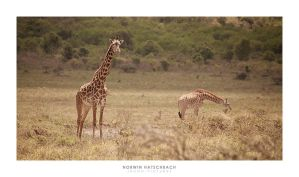 Africa 012 by jahno-pictures