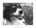 fotomodel dog by Marys-Laboratory
