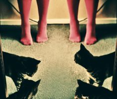 4 pink legs and 4 cats by sayra