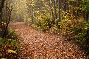 other path by vonrubinstein