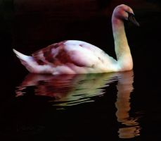 The Dying Swan by creativemikey