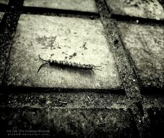 Tale Of a Hopeless Millipede by proama