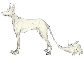 Coyote - Full by Art-Stew-Frou-Frou